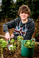 Young allotmenteer Harry Lockyear, 14, from Westfield Allotment and Garden Society (WAGS) harvests some sprouts from his raised bed.
